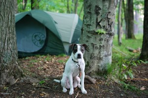 Norris Lake Camping